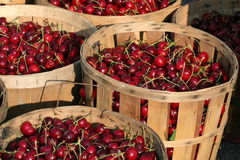 Bushels of Cherries. Cherries for sale at an outdoor farmer's market Stock Photos