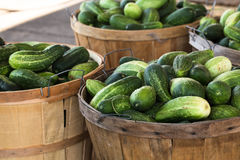 Bushels of Cucumbers at Farmers Market Stock Photo