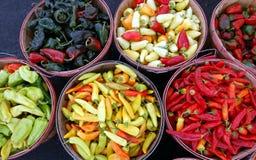 Bushels Of Chiles Royalty Free Stock Photos