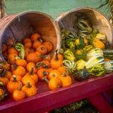 Bushels of Pumpkins and gourds Stock Photos
