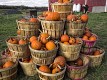 Bushels of Pumpkins Royalty Free Stock Images