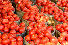 Bushels of Tomatoes Stock Images