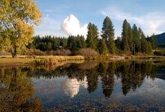bushers镇定垂直构成湖moutain反射的反映日落的结构树 免版税库存图片