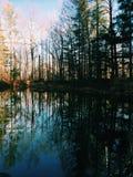 bushers镇定垂直构成湖moutain反射的反映日落的结构树 免版税库存照片