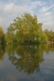 bushers lugnar trees för solnedgången för reflexionen för sammansättningslakemoutain vertikala reflekterande Arkivbilder
