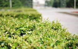 bushes закрывают фото s листьев вверх Стоковые Изображения