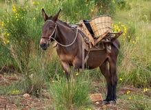 bushes осляк стоковое фото rf