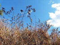 bushes сушат Стоковые Изображения RF