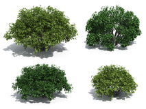 Bushes vector illustration