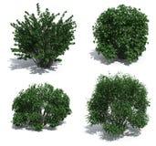 bushes Стоковое фото RF