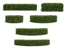 bushes Стоковое Фото