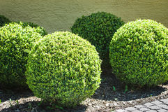 Bushes. Beautiful round bushes at a back yard in vienna Stock Photos