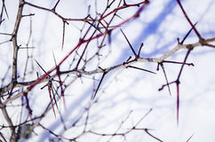 bushes Стоковое Изображение RF