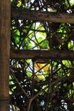 bushes Стоковое Изображение