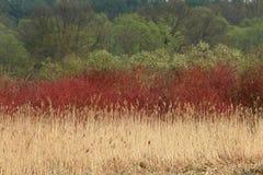 bushes валы Стоковые Фото