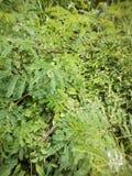 bushes Стоковая Фотография
