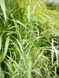 bushes Стоковые Фото