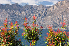 Bushes against mountains Stock Images