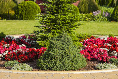 Bushes ahd flowerbed in the park. Royalty Free Stock Photos