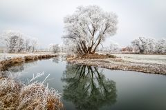 Free Bushes And Trees Coverd With Hoarfrost Stock Images - 141198084
