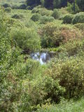Bushes around a small pond in a Sunny summer day Royalty Free Stock Photo