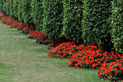 Bushes as wall in line Stock Image