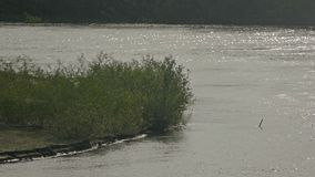 Bushes on a beach near the river slow motion video stock video footage