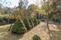 Symmetry in the park. Bushes that convey symmetry beautiful generic Royalty Free Stock Image