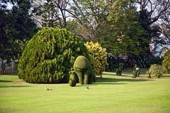 Bushes cut to animal figures in the park of Bang Pa-In Stock Photography