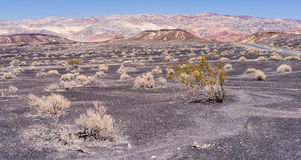 Bushes in the Desert. Group of bushes in the Death Valley. Black sand and colorful mountains Stock Image