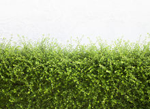 Bushes Fence Leaves Stock Photos