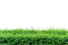 Bushes fence Royalty Free Stock Images