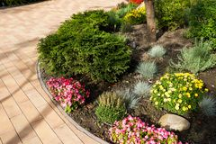 Bushes and flowers in landscape design. Of paths in the yard royalty free stock photo