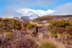 Bushes in front of volcano in tongariro national park. New Zealand Stock Photo