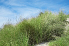 Bushes of grass. On the beach Royalty Free Stock Photos