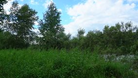 Bushes, grass and trees sway. In the wind stock video footage
