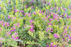 Bushes with green and purple flowers stock image