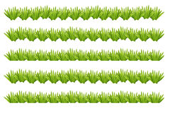 Bushes green on a white background. Royalty Free Stock Image