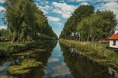 Bushes and grove along canal with sky reflected on water, in the late afternoon and blue sky, near Damme. royalty free stock image