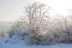 Bushes in Ice Royalty Free Stock Photo