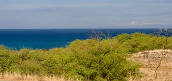 Bushes near Hapuna beach Stock Image