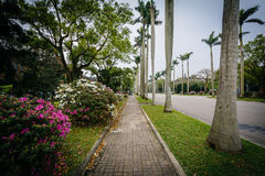 Bushes and palm trees along a walkway at National Taiwan Univers. Ity, in Taipei, Taiwan Stock Images