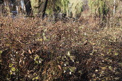Bushes in a parc. Bushes in Parc Bazilescu in Bucharest in late autumn stock photography