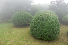 Bushes in park. Beautiful and well-arranged bushes in misty Japanese park, Hakone, Japan Stock Image