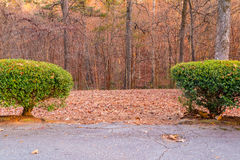 Bushes and park trees behind it Royalty Free Stock Images