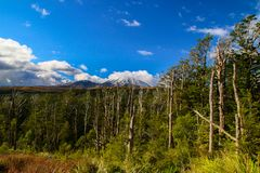 Tongariro wild forest and bushes of Central Plateau`s Tongariro National Park in New Zealand, green trees and plants royalty free stock image
