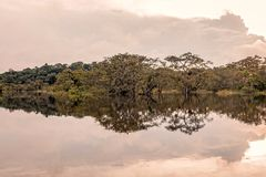 Free Bushes Reflecting On The River, Amazonian Jungle Stock Images - 76668284