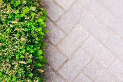 Bushes. Roadside paving top view and green bushes with copy space for text , flat lay stock images