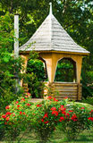 Bushes of roses with arbour. In a park Stock Image