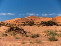 Bushes and sand dunes on the Sahara. Maroko desert - Sahara - Merzouga 2010 Royalty Free Stock Photography